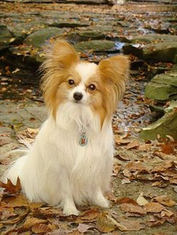 250pxrileypapillon